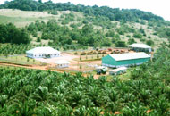 bidco oil palm